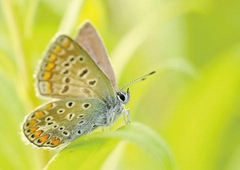 Jako křídly motýla – Mocná síla ne-síly